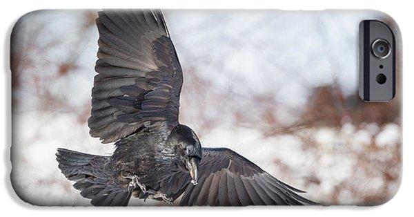 Raven In Flight IPhone Case by Bill Wakeley