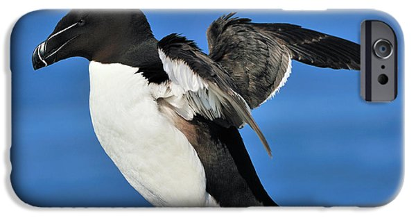 Razorbill IPhone 6s Case by Tony Beck