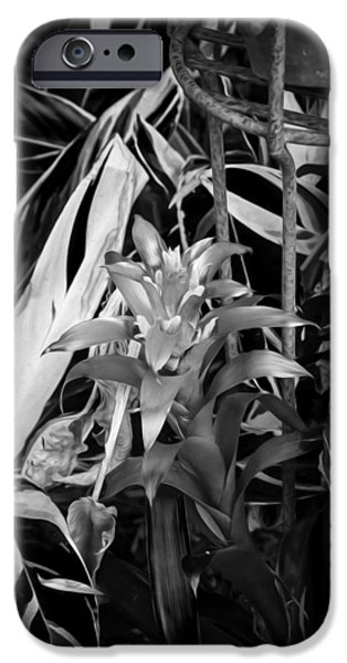 Red Bromeliad And Tricolor Gingers Bw IPhone Case by Rich Franco
