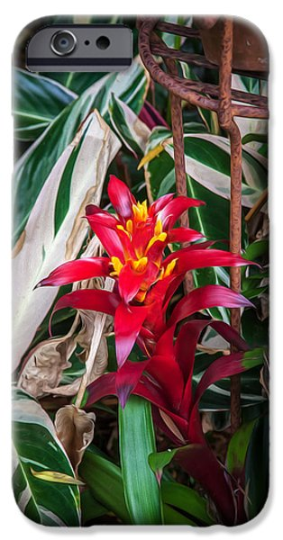 Red Bromeliad And Tricolor Gingers IPhone Case by Rich Franco