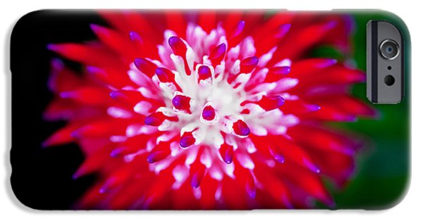 Red Bromeliad Painted IPhone Case by Rich Franco