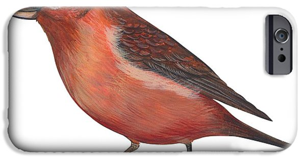 Red Crossbill IPhone 6s Case by Anonymous