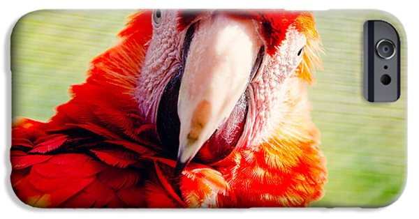 Red Macaw IPhone 6s Case by Pati Photography