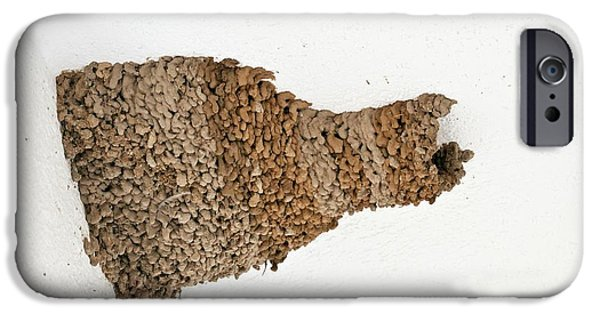 Red-rumped Swallow Nest On A House IPhone Case by Bob Gibbons