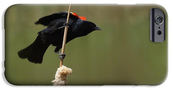 Red Winged Blackbird 3 IPhone 6s Case by Ernie Echols