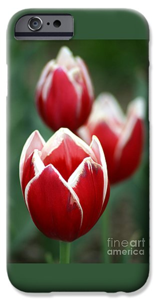 Redwhitetulips6838 IPhone Case by Gary Gingrich Galleries