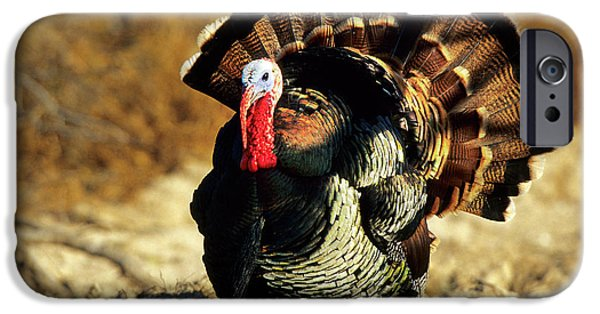 Rio Grande Wild Turkey (meleagris IPhone Case by Richard and Susan Day
