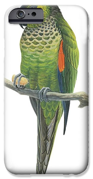 Rock Parakeet IPhone 6s Case by Anonymous