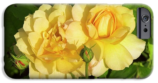 Rosa 'pegasus' IPhone 6s Case by Adrian Thomas