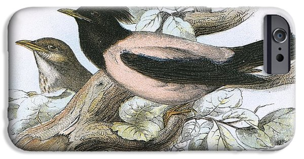 Rose Coloured Starling IPhone 6s Case by English School