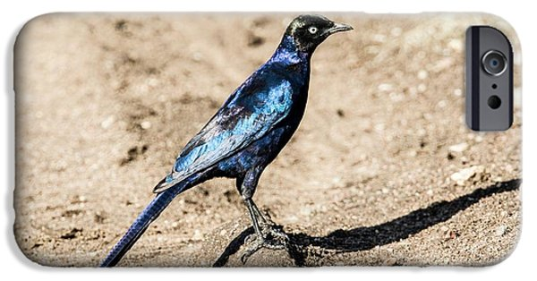 Ruppell's Glossy-starling IPhone 6s Case by Photostock-israel