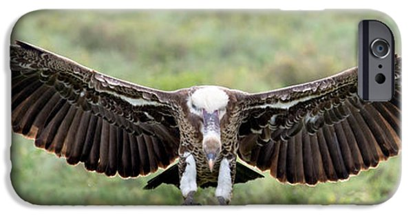 Ruppells Griffon Vulture Gyps IPhone 6s Case by Panoramic Images