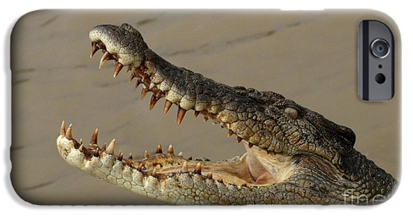 Salt Water Crocodile 1 IPhone 6s Case by Bob Christopher