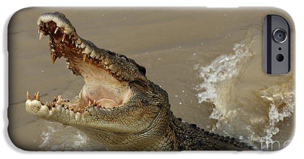 Salt Water Crocodile 2 IPhone 6s Case by Bob Christopher