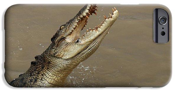 Salt Water Crocodile Australia IPhone 6s Case by Bob Christopher