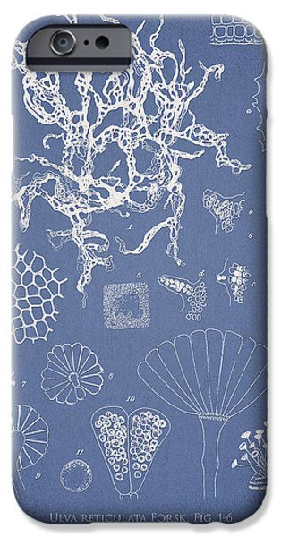 Salwater Algae IPhone Case by Aged Pixel