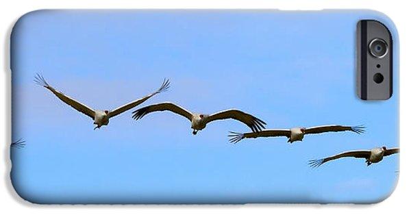 Sandhill Crane Flight Pattern IPhone 6s Case by Mike Dawson