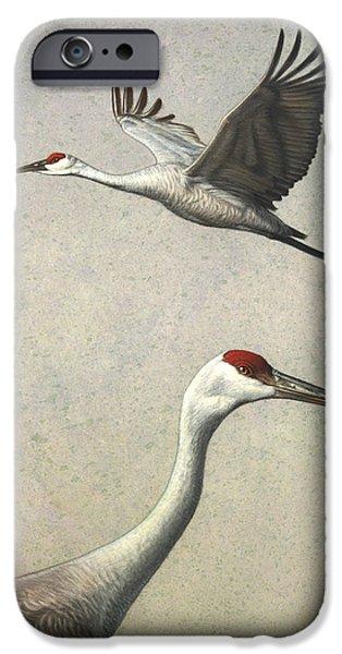 Sandhill Cranes IPhone 6s Case by James W Johnson