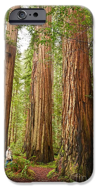 Scale - The Beautiful And Massive Giant Redwoods Sequoia Sempervirens In Redwood National Park. IPhone Case by Jamie Pham