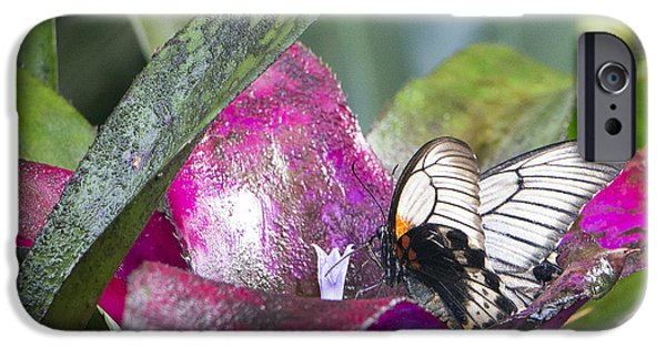 Scarlet Mormon IPhone Case by Dorothy Hilde