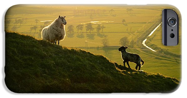 Scottish Sheep And Lamb IPhone 6s Case by Mr Doomits
