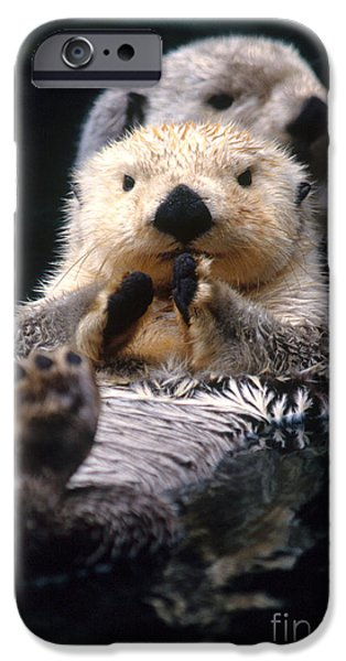 Sea Otter Pup IPhone 6s Case by Mark Newman