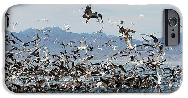 Seabirds Feeding IPhone 6s Case by Christopher Swann