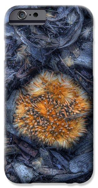 Seed Pod IPhone Case by Tom Mc Nemar