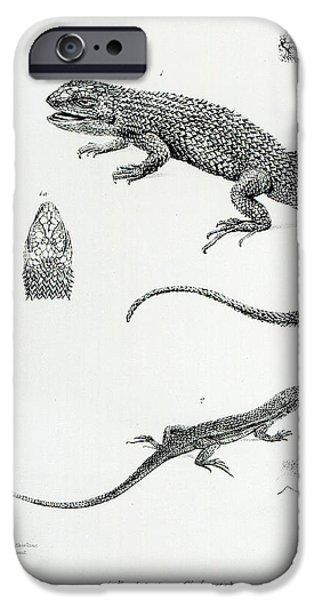 Shingled Iguana IPhone Case by English School