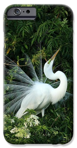 Showy Great White Egret IPhone 6s Case by Sabrina L Ryan