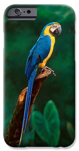 Singapore Macaw At Jurong Bird Park  IPhone 6s Case by Anonymous