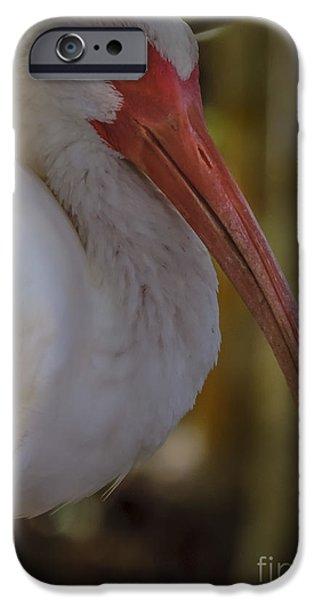 Sleepy Ibis IPhone Case by Nancy L Marshall