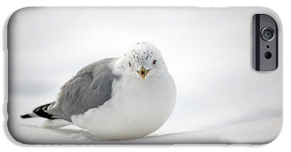 Snow Gull IPhone Case by Karol Livote