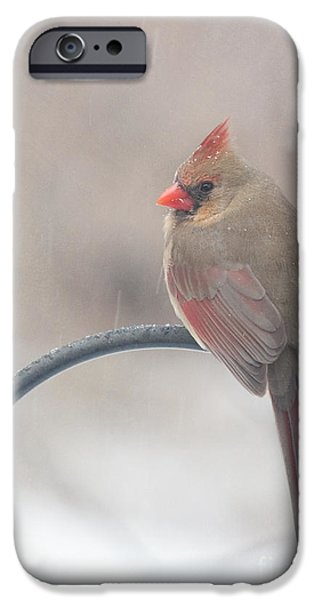 Snow Shower IPhone Case by Kay Pickens