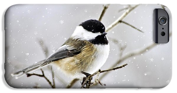 Snowy Chickadee Bird IPhone 6s Case by Christina Rollo