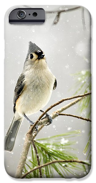 Snowy Songbird IPhone 6s Case by Christina Rollo