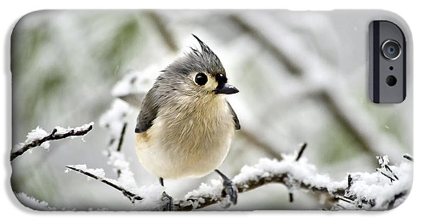Snowy Tufted Titmouse IPhone 6s Case by Christina Rollo