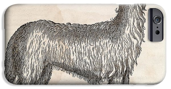 South American Camelid IPhone 6s Case by Middle Temple Library