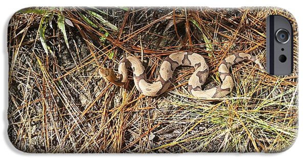 Southern Copperhead IPhone Case by JC Findley