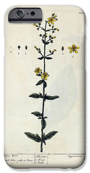 St John's Wort Plant IPhone Case by National Library Of Medicine