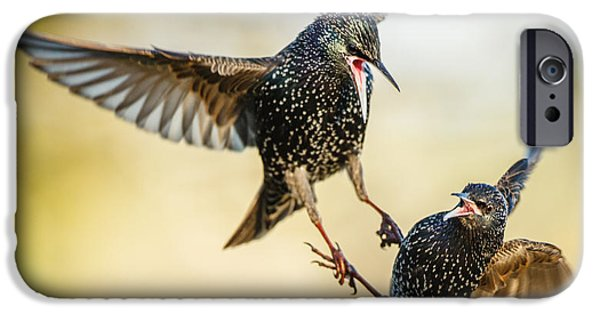 Starling Aerial Battle IPhone 6s Case by Izzy Standbridge