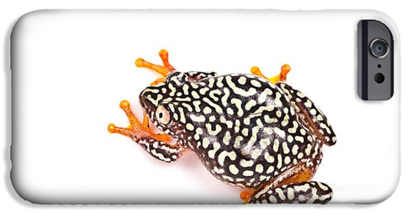 Starry Night Reed Frog IPhone Case by David Kenny