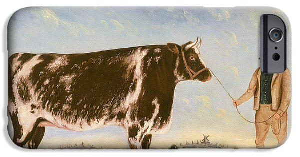 Study Of A Shorthorn IPhone Case by William Joseph Shayer
