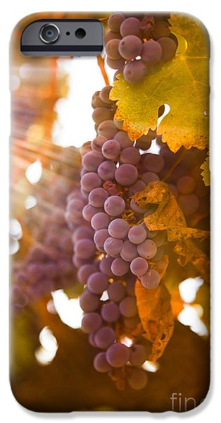 Sun Ripened Grapes IPhone Case by Diane Diederich