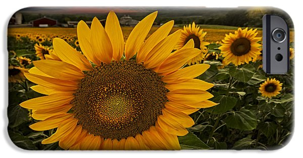 Sunflower Field Forever IPhone Case by Susan Candelario