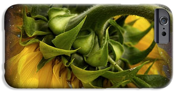 Sunflower In Cosmos IPhone Case by Panoramic Images