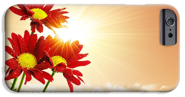 Sunrays Flowers IPhone Case by Carlos Caetano
