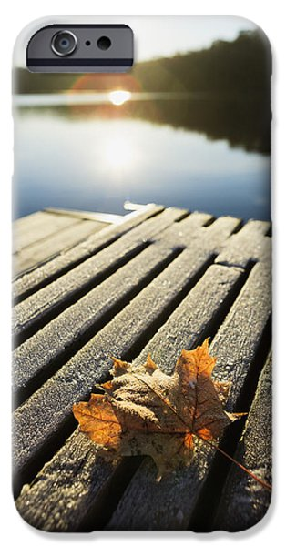 Sunrise Over Leaf On Floating Dock In IPhone Case by Yves Marcoux