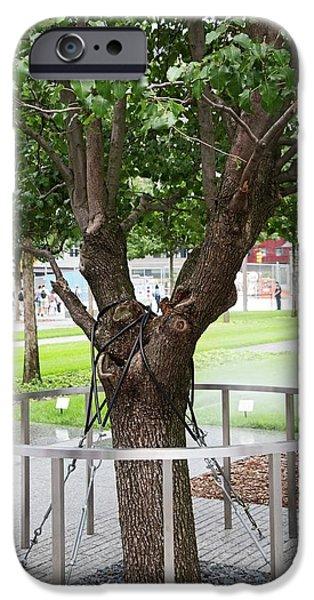Survivor Tree IPhone Case by Jim West