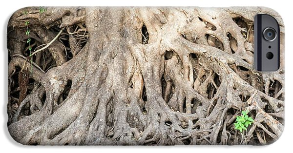 Sycamore Fig Tree Roots Binding The Soil IPhone Case by Peter Chadwick